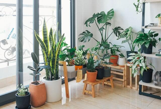 plants in the room
